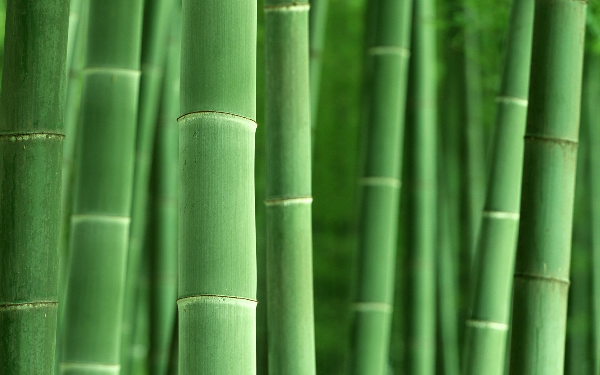 bamboo wallpapers bamboo hd images guoguiyan collection | wallpapers
