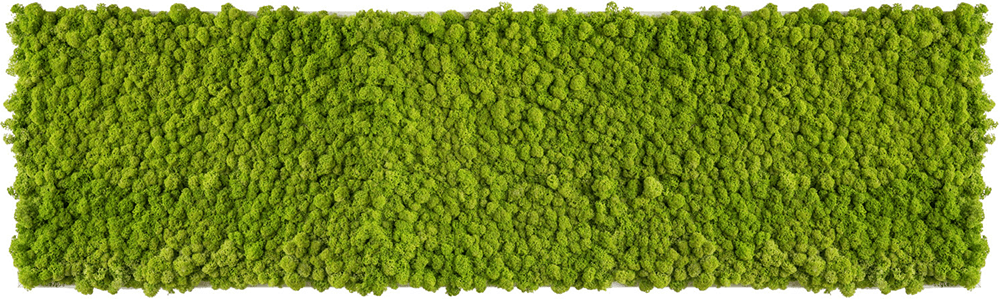 Vorstellung unserer Produkte: Pflanzen- und Moosbilder von styleGREEN von FlowerArt GmbH | styleGREEN | homify