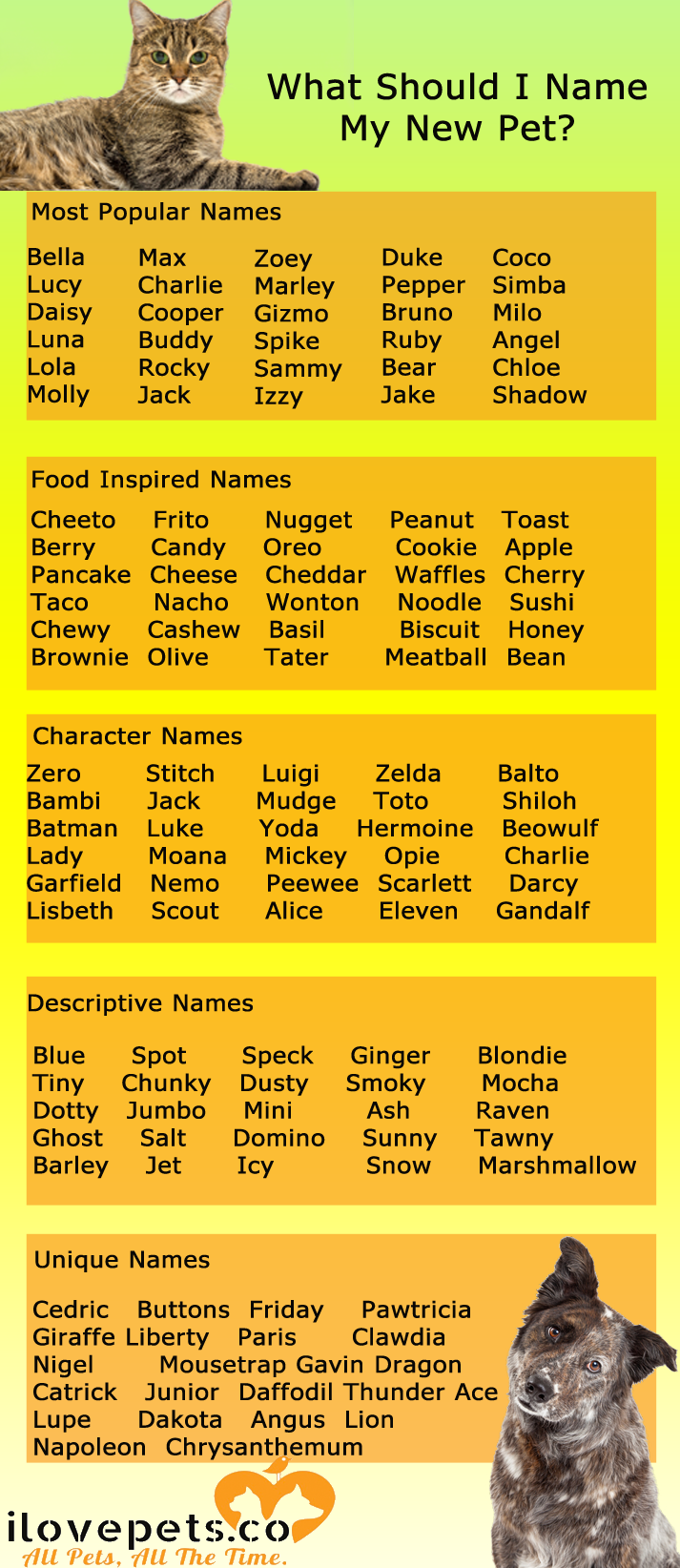 What To Name Your New Cat Or Dog Kitten Names Pets Cat Training