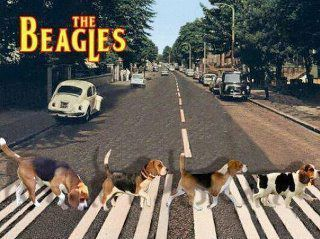 Oh Yeah The Beagles Abbey Road Beagle Funny Beagle Beagle Dog
