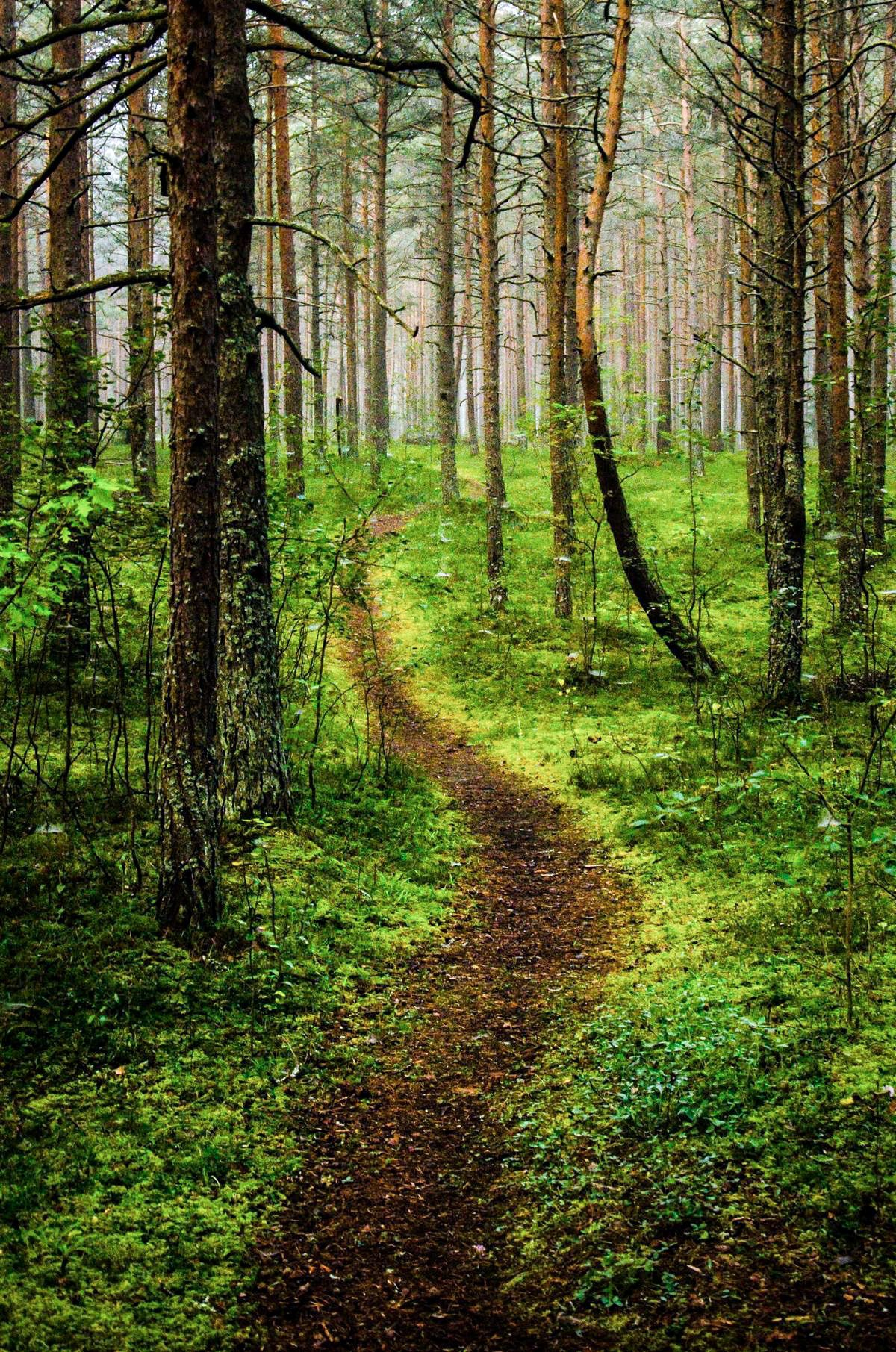 Image result for path through the woods