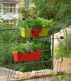 les saveurs s 39 installent au balcon les plantes aromatiques continuent tre cultiv es par. Black Bedroom Furniture Sets. Home Design Ideas