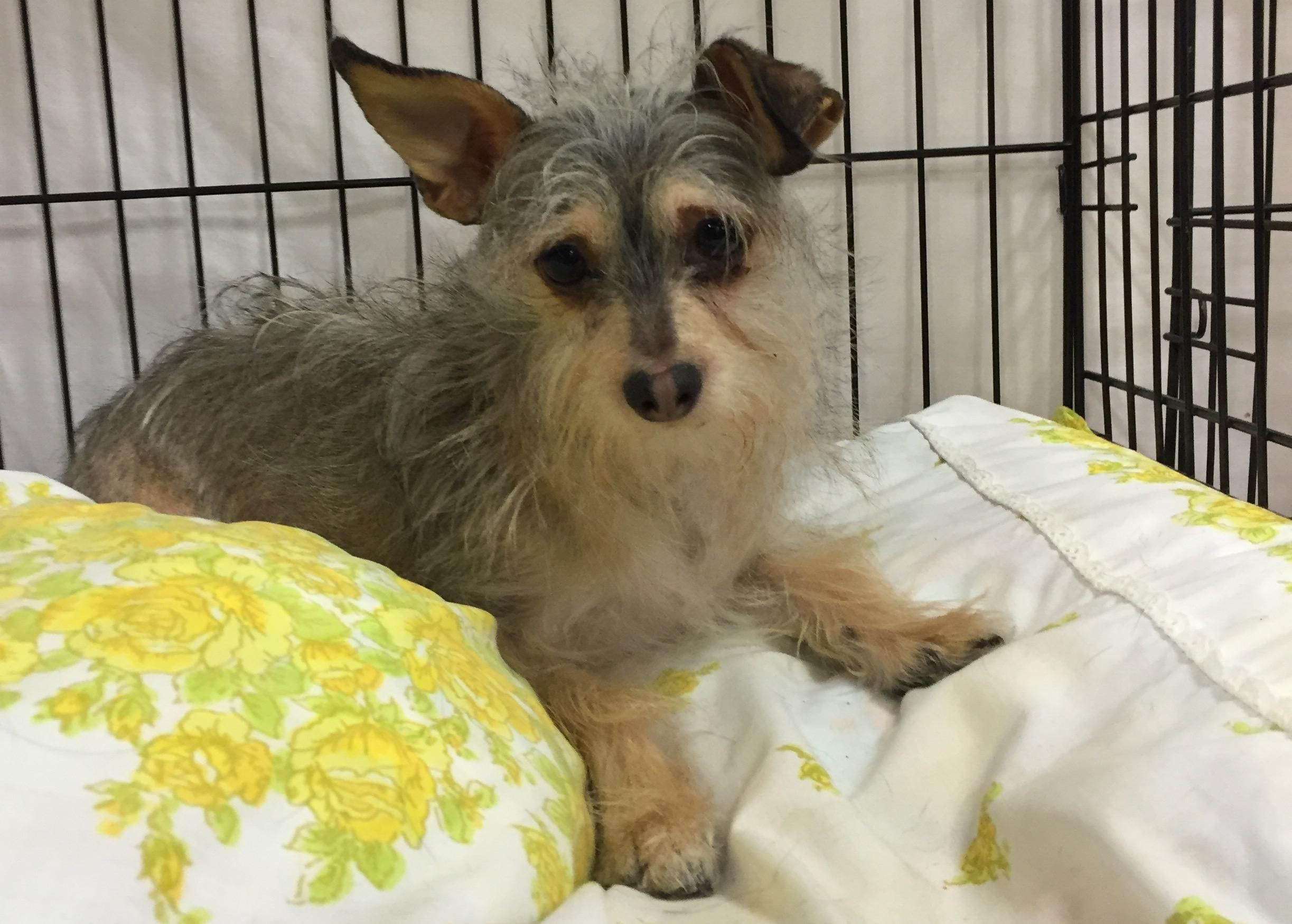 Adopt Ratatoie On Petfinder Terrier Mix Dogs Dog Love Pet Adoption