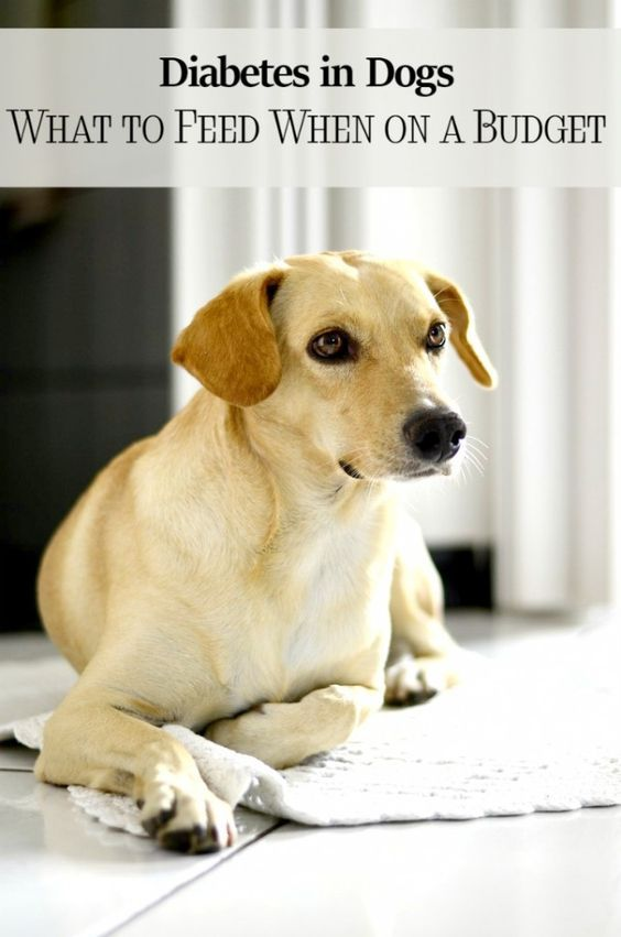 Diabetes In Dogs What To Feed When You Re On A Budget Diabetic