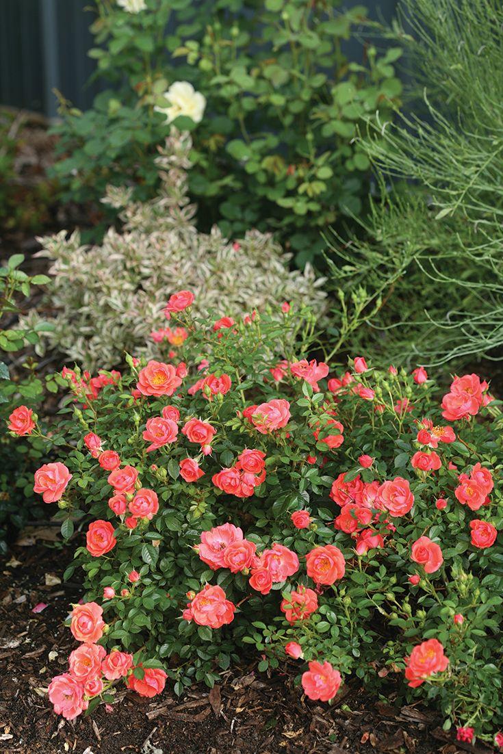 Simple Rose Garden: Oso Easy® Mango Salsa