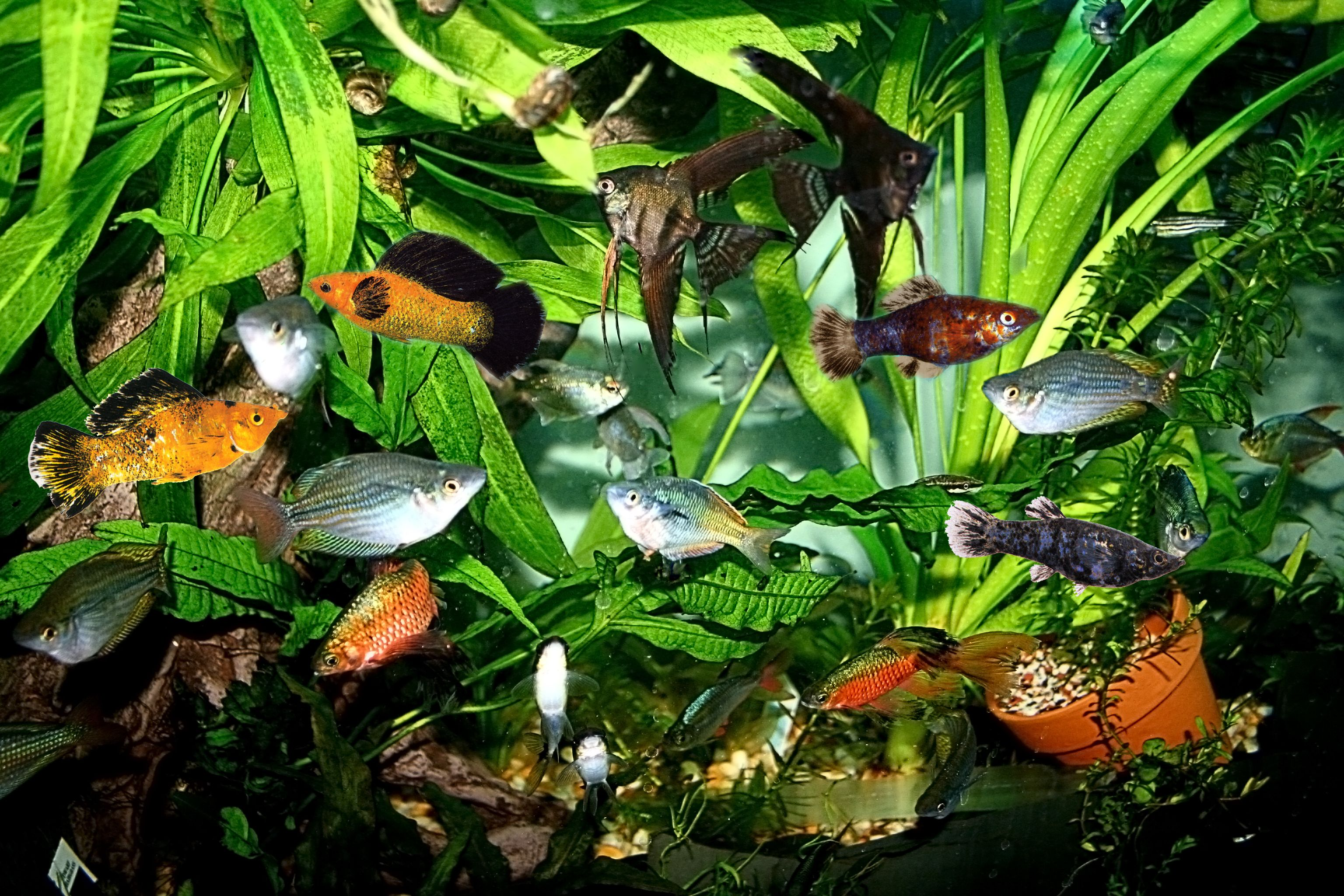 Tropical fish aquarium fish ichthyologist thomas r for Exotic fish tanks