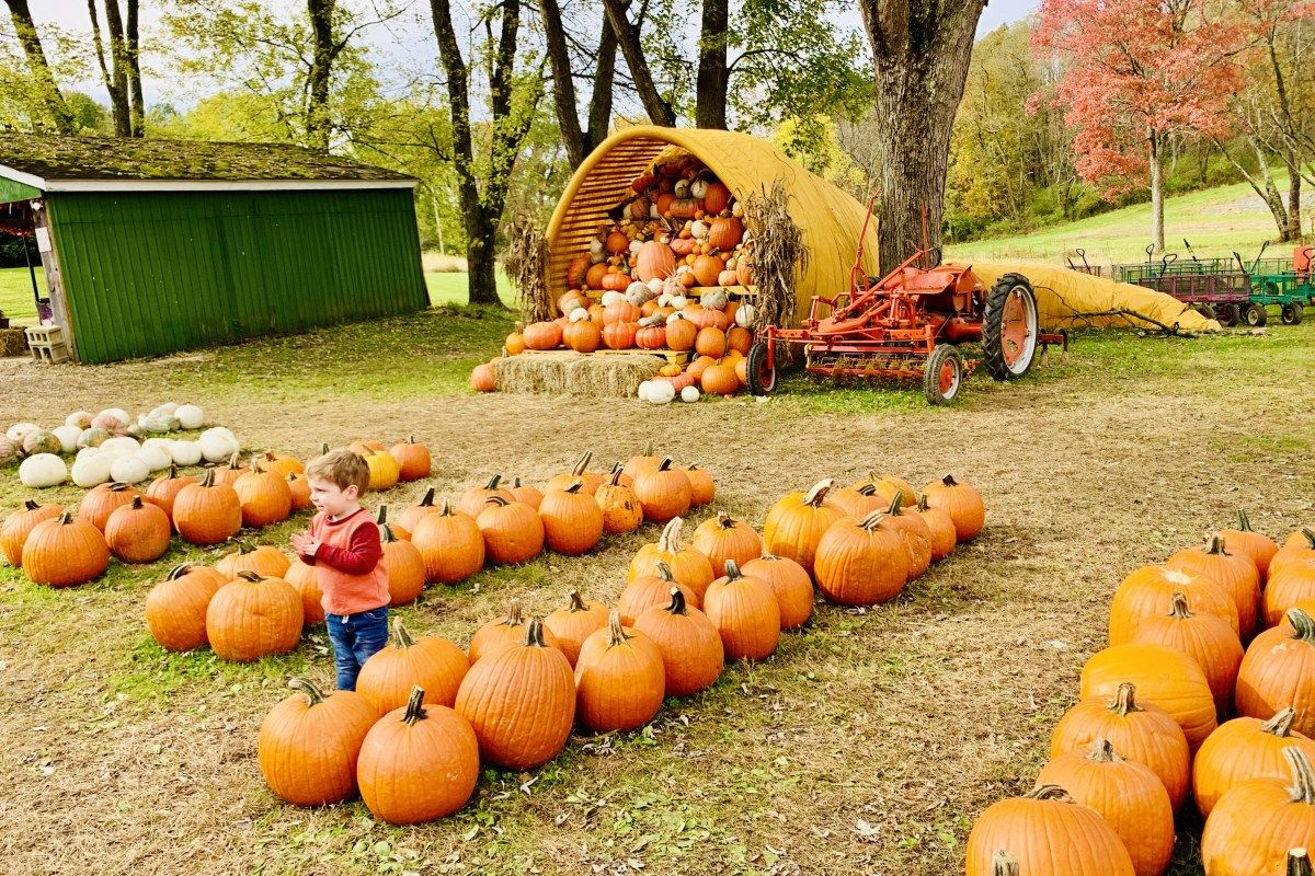 13 Awesome Fall Activities In Pittsburgh Fall 2020 In 2020 Autumn Activities Trip Planning Fun Festival
