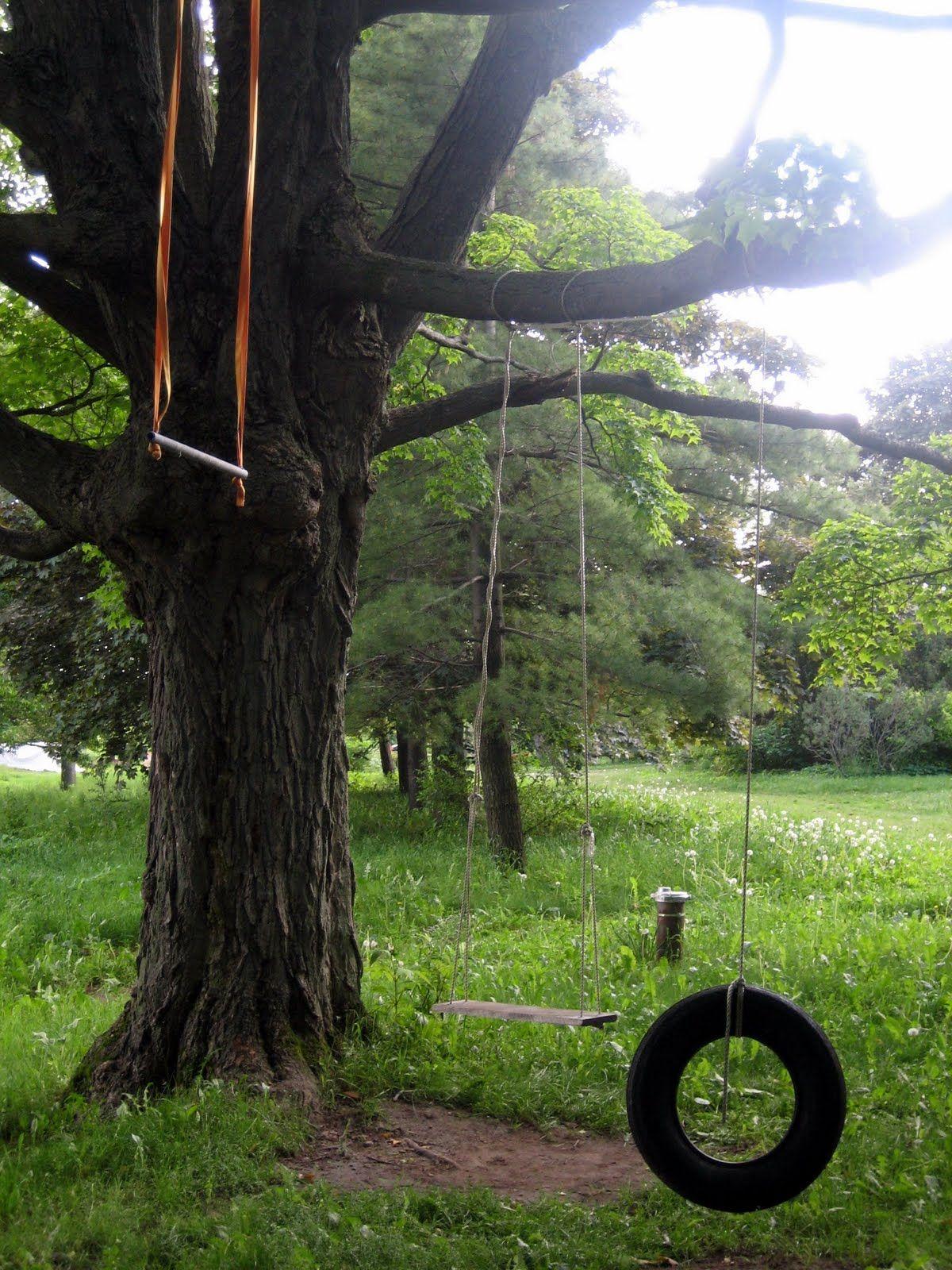 Tree Swings | Big tree, Outdoor gardens, Backyard