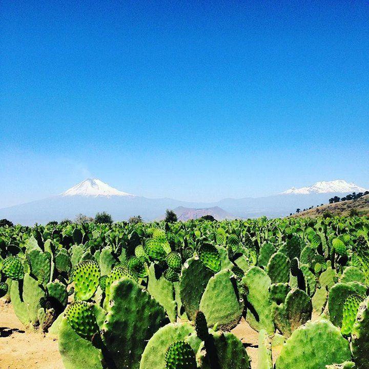 Los volcanes por la mañana #igersmexico #igerspuebla #Puebla #mexico #cholula #popocatepetl http://ift.tt/1V44uCT