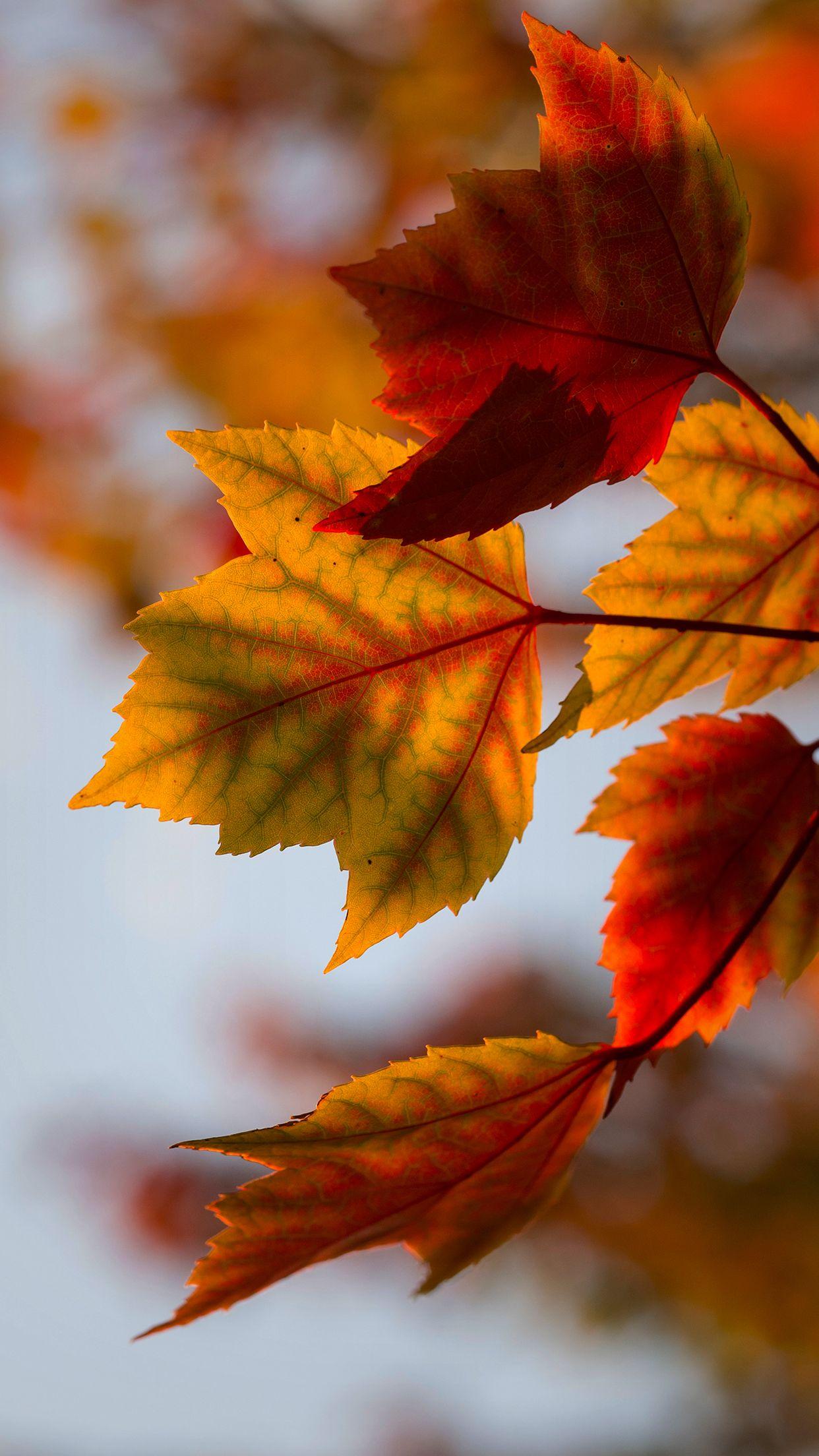 Amazing Hd Autumn Wallpaper Fall Wallpaper Iphone Wallpaper Fall Fall Pictures