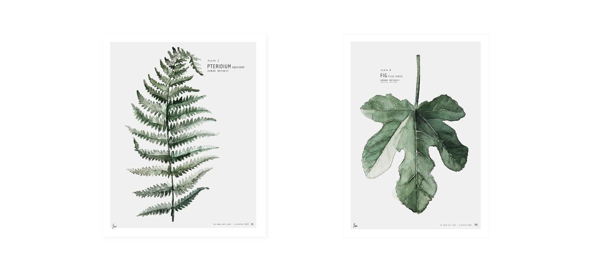 botanic2.png (2001×896)