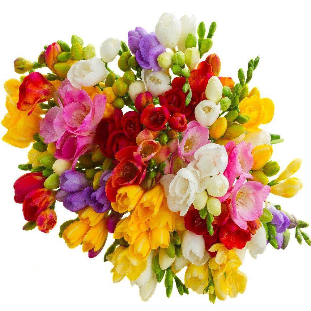 Allium Ampeloprasum Fresia Flower Good Morning Beautiful Flowers Freesia Flowers