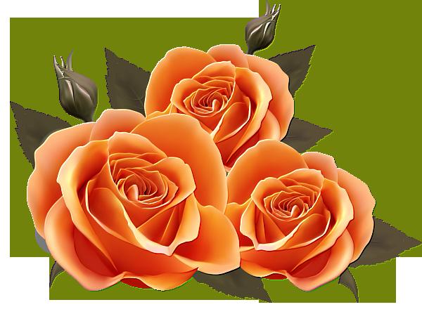 Naranjas Rosas Pinterest Flores Floral Y Imagenes De Flores