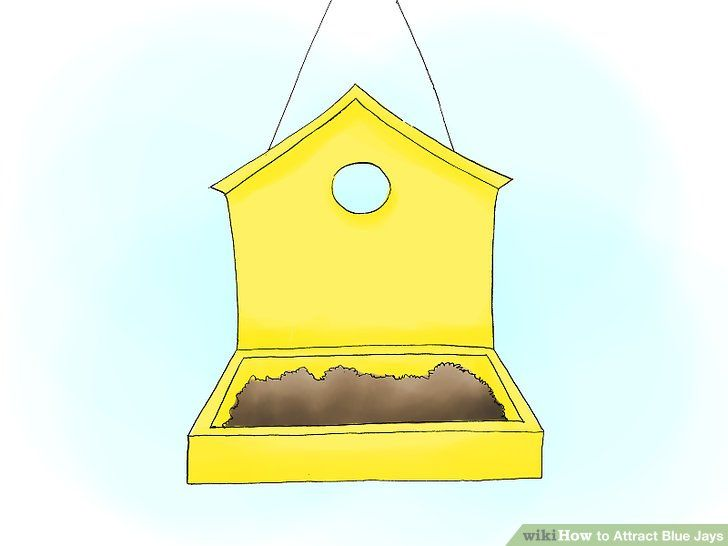 how to attract blue jays birds