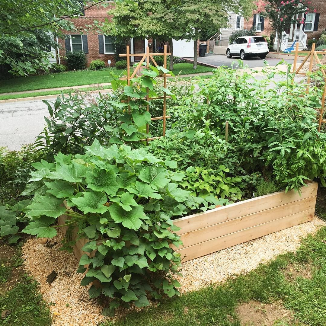 2 months later our raised bed garden at a home in Arlington VA is