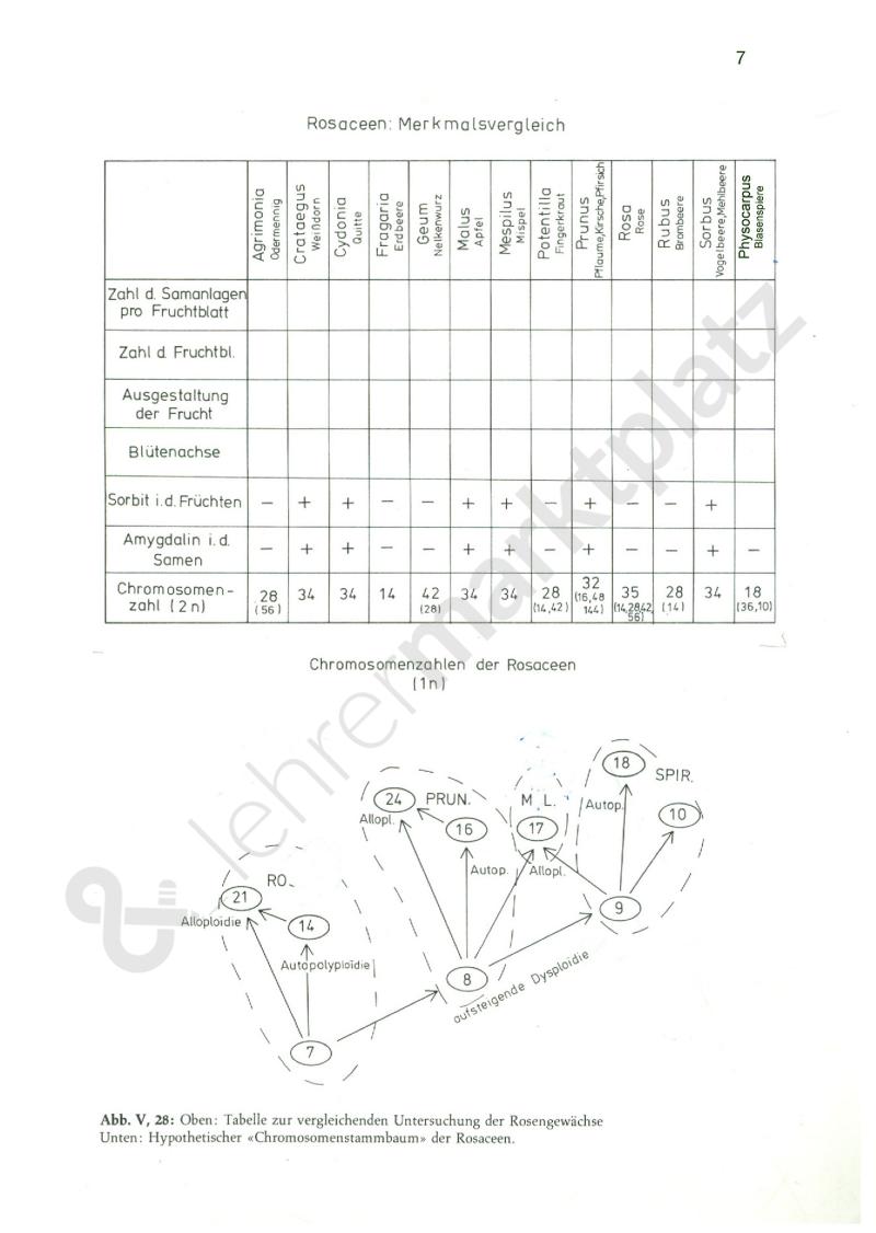 Evolution und System - Seite 7 | Biologie Unterrichtsmaterialien ...