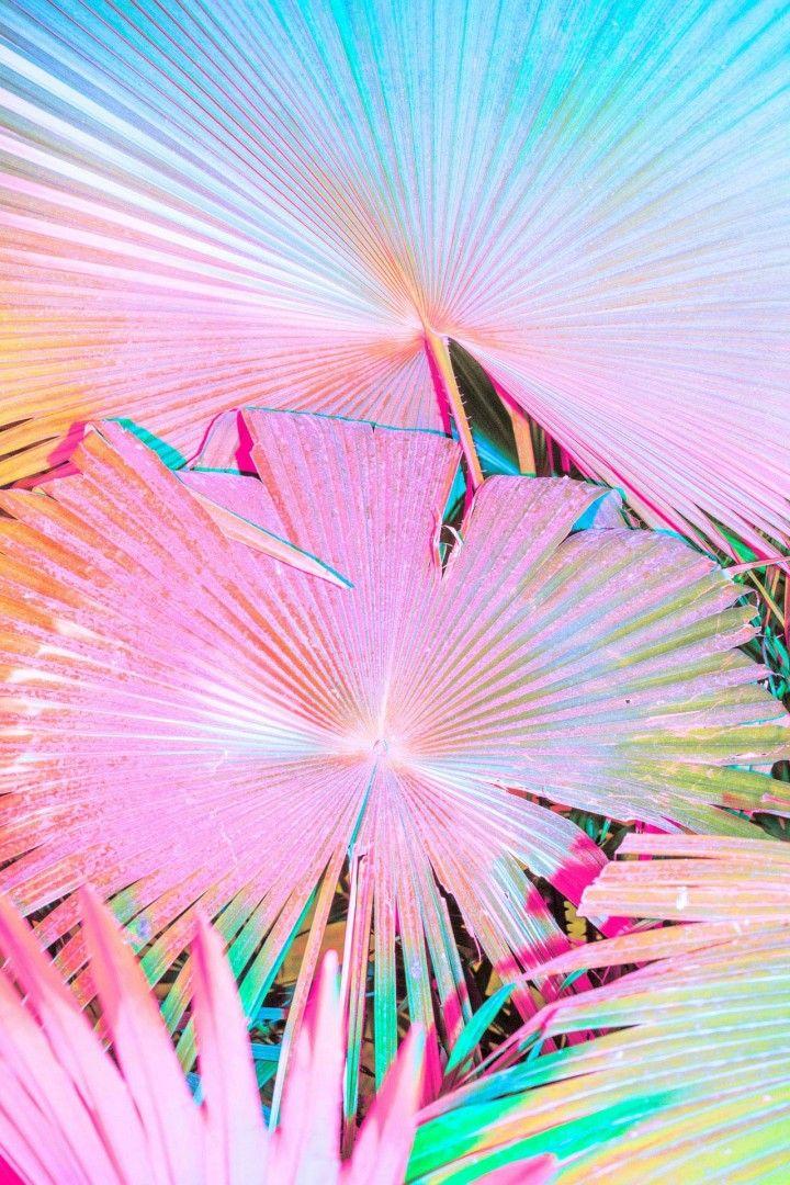 Des Fleurs Fluos Et Flashys Photographie Florale Fond Ecran Iphone Fleurs