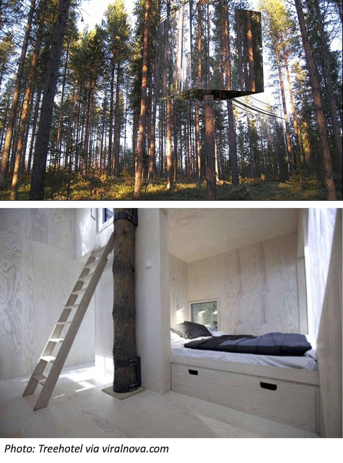 Invisible treehouse click here to read this bedtime math problem