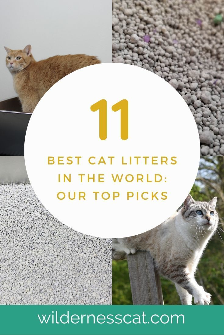 The Best Cat Litter in the World 11 Best Cat Litters of
