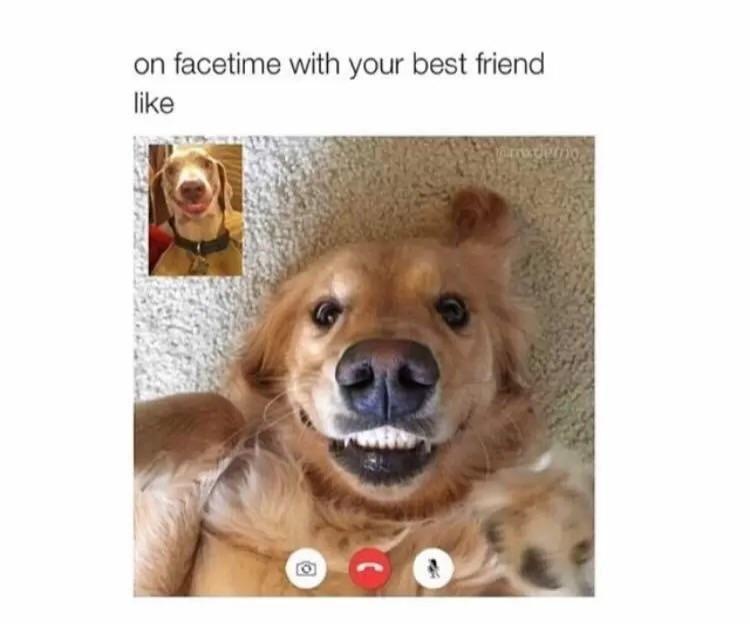 Best Friends Forever Meme Funny : On facetime with your best friend like memes pinterest