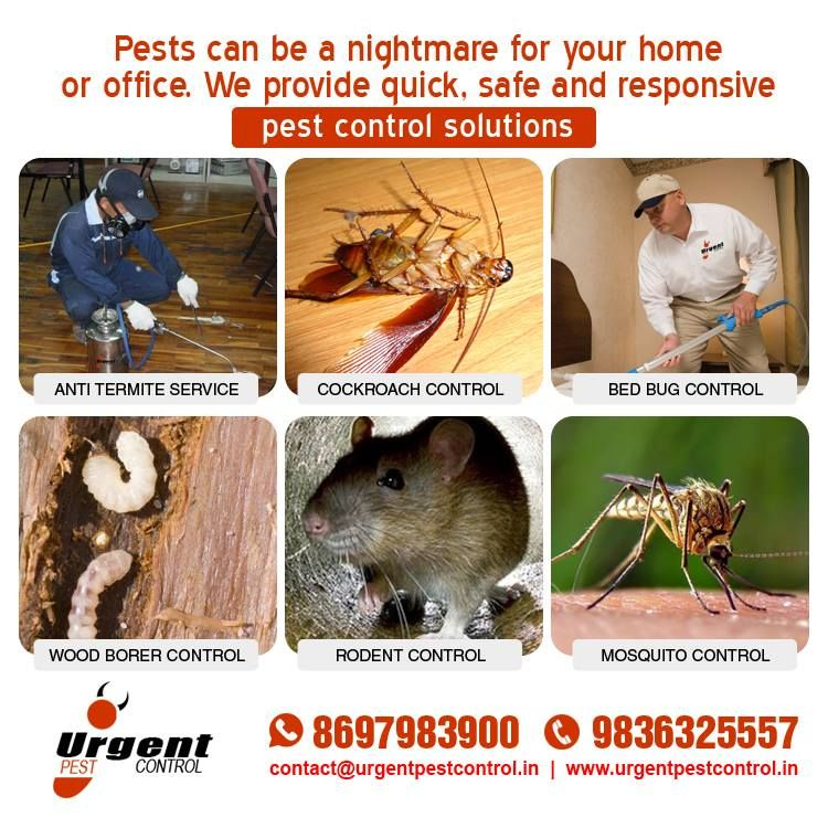 Pests Can Be A Nightmare For Your Home Or Office We Provide Quick Safe And Responsive Pest Control Solutions T Pest Control Bed Bug Control Cockroach Control