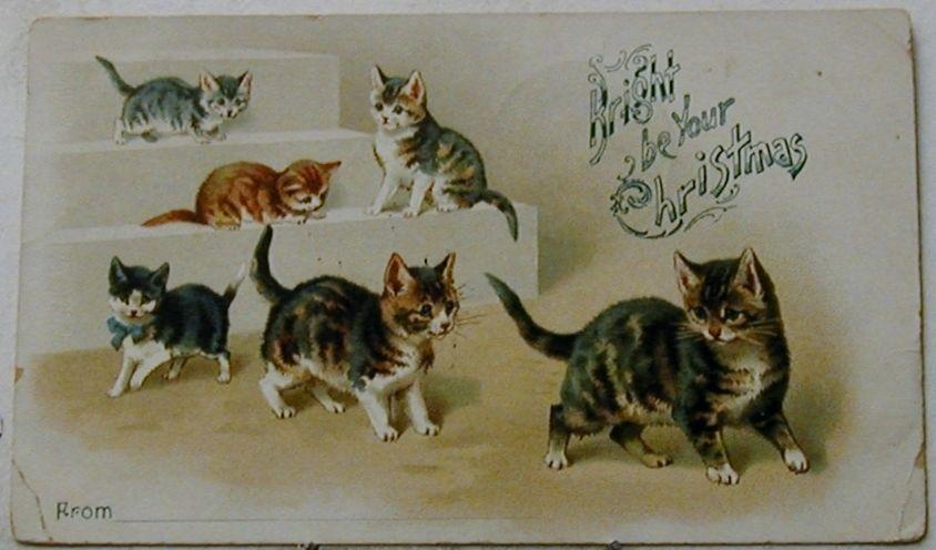 A4749    CHRISTMAS    POSTCARD,     CATS