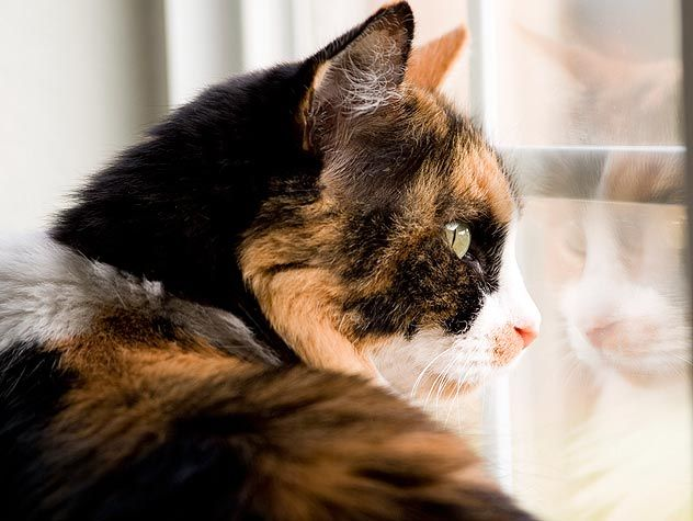 Starting a NonProfit to Help Animals Animals, Animal