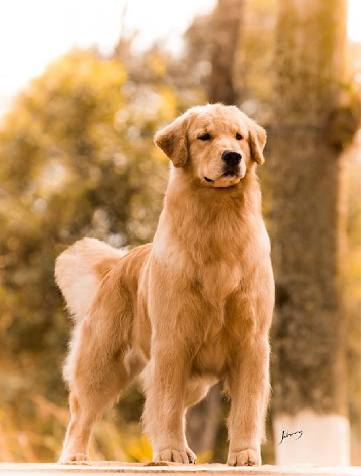 Pin Em Dogs
