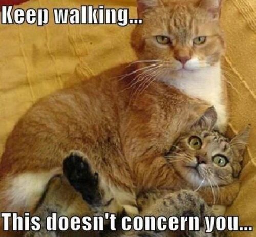 Image from http://www.funwalls.in/wp-content/uploads/2015/05/Funny-Cat-Memes-Tumblr.jpg.