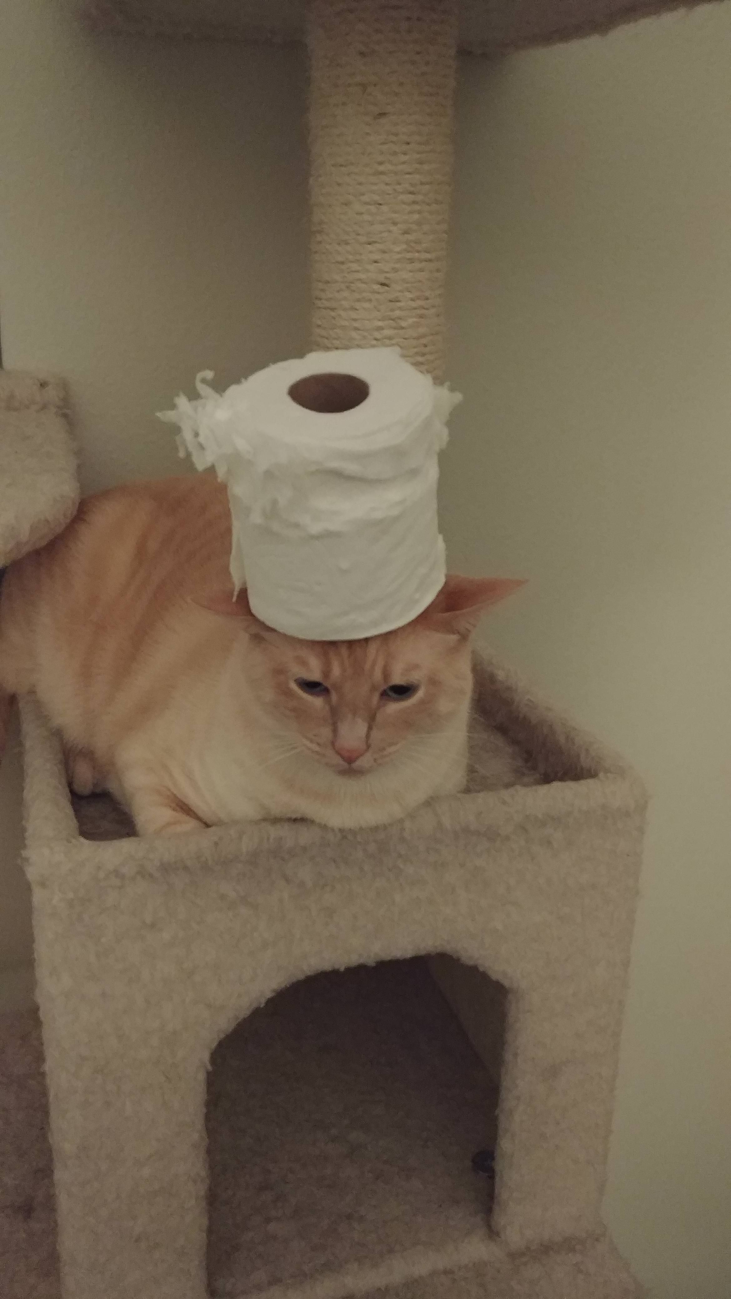 My Cat Decided To Eat Toilet Paper This Was His Punishment
