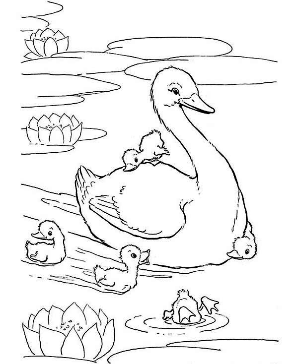 Cute Mama And Baby Ducks Coloring Page