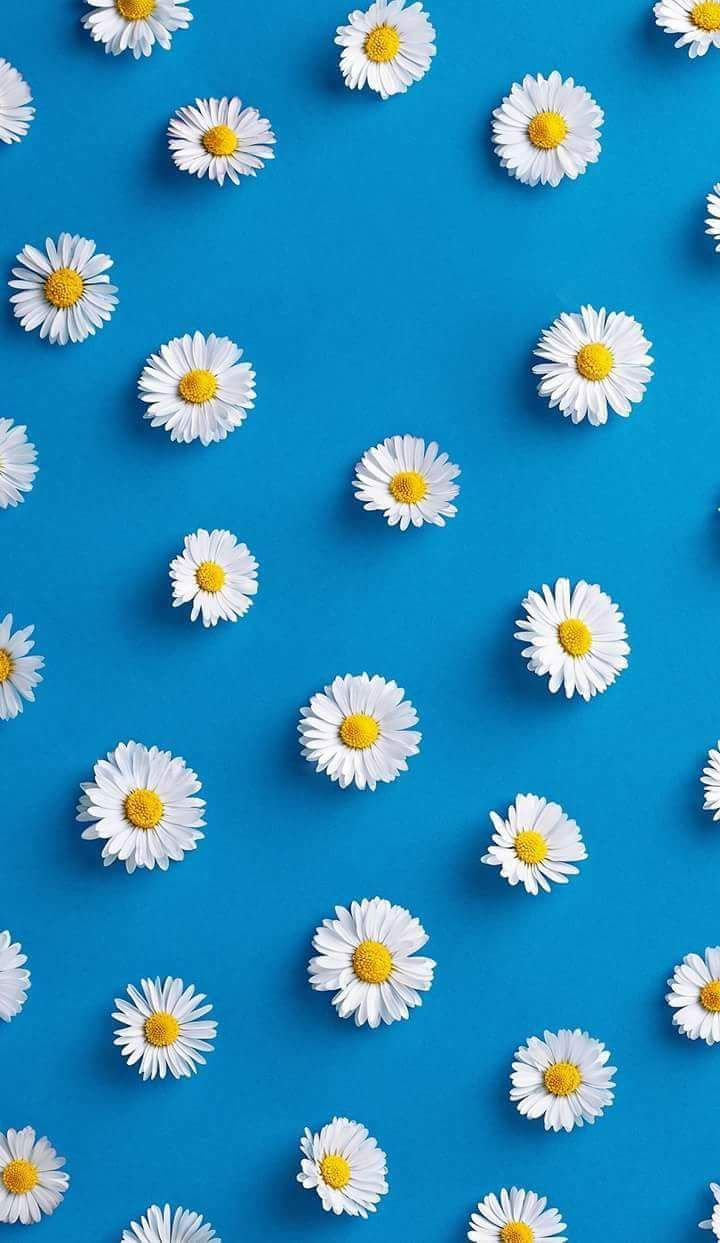 خلفيات موبايل للبنات Tecnologis Tumblr Iphone Wallpaper Daisy Wallpaper Flower Wallpaper