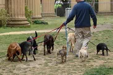 Teaching your dog to search. Dog walker, Dog walking, Dogs
