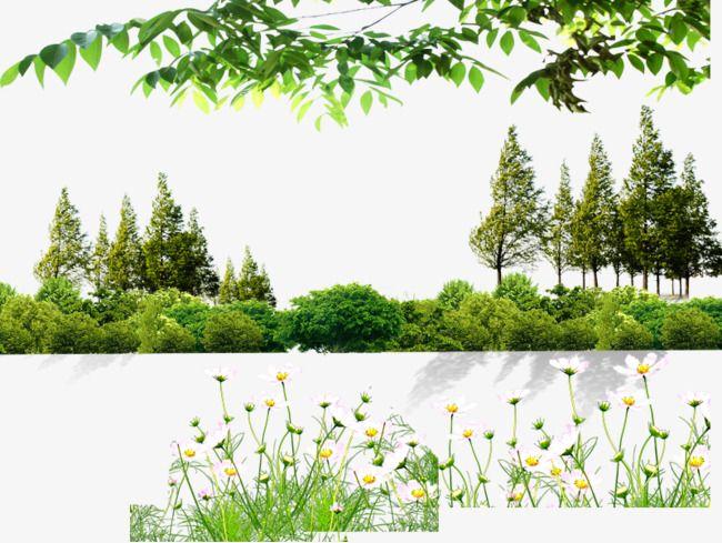 Arboles y arbustos arboles verdes flores sotobosque png - Arboles y arbustos ...