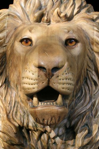 Really close lion Carved by M.J.Y.