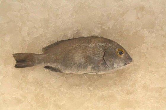 sustainable fishing, overfishing, WWF, Persian Gulf, Arabian Gulf