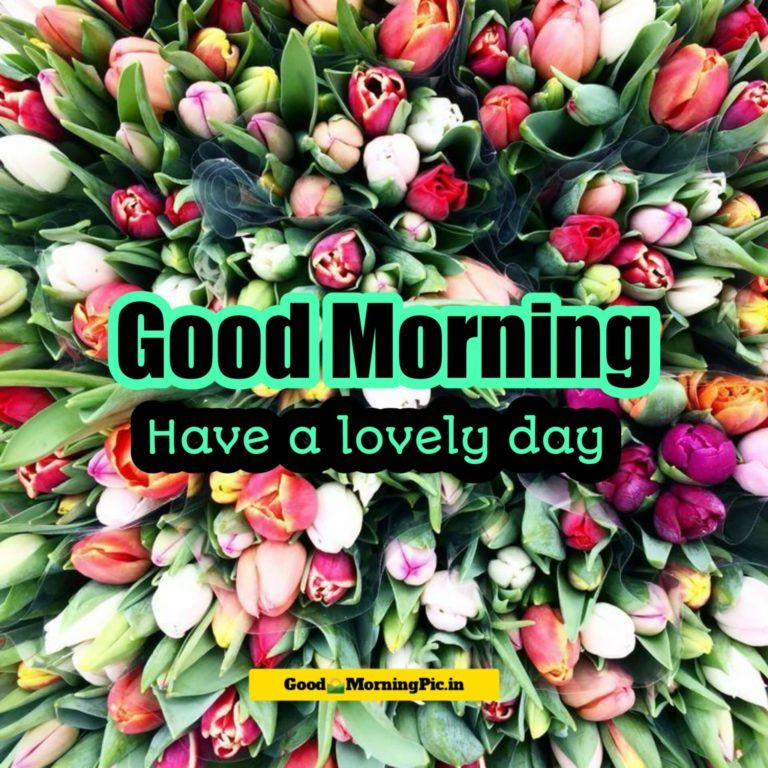 Good Morning Flower Images 4k Hd Free Download 2020 Good Morning Pic Good Morning Flowers Flower Images Good Morning Wallpaper