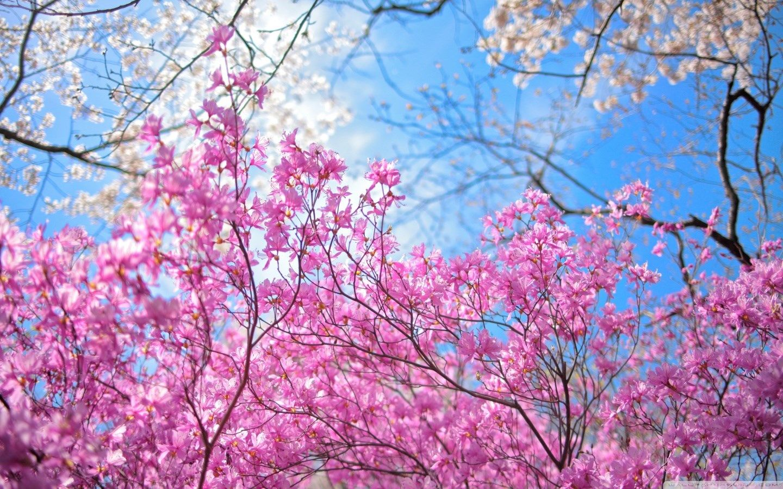 Happy Spring Flower Wallpaper 1440x900 Sharovarka Pinterest