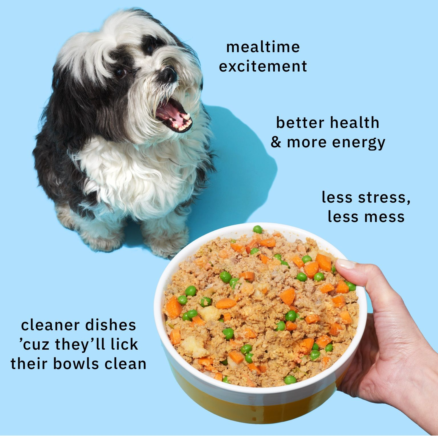 Petplate Difference Dog Nutrition Homemade Dog Treats Whole