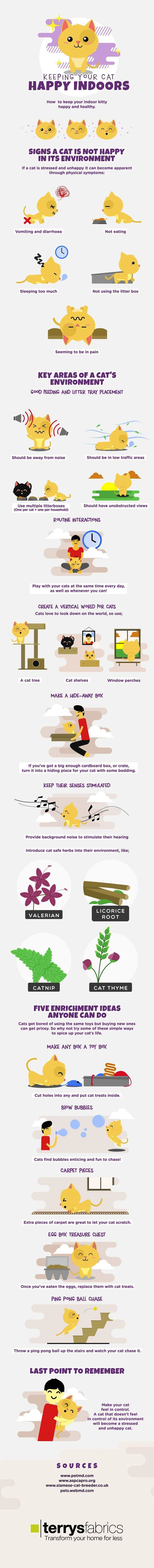 Spectacular Cats And Kittens Playing Repin Cat Infographic Inside Cat Pet Hacks