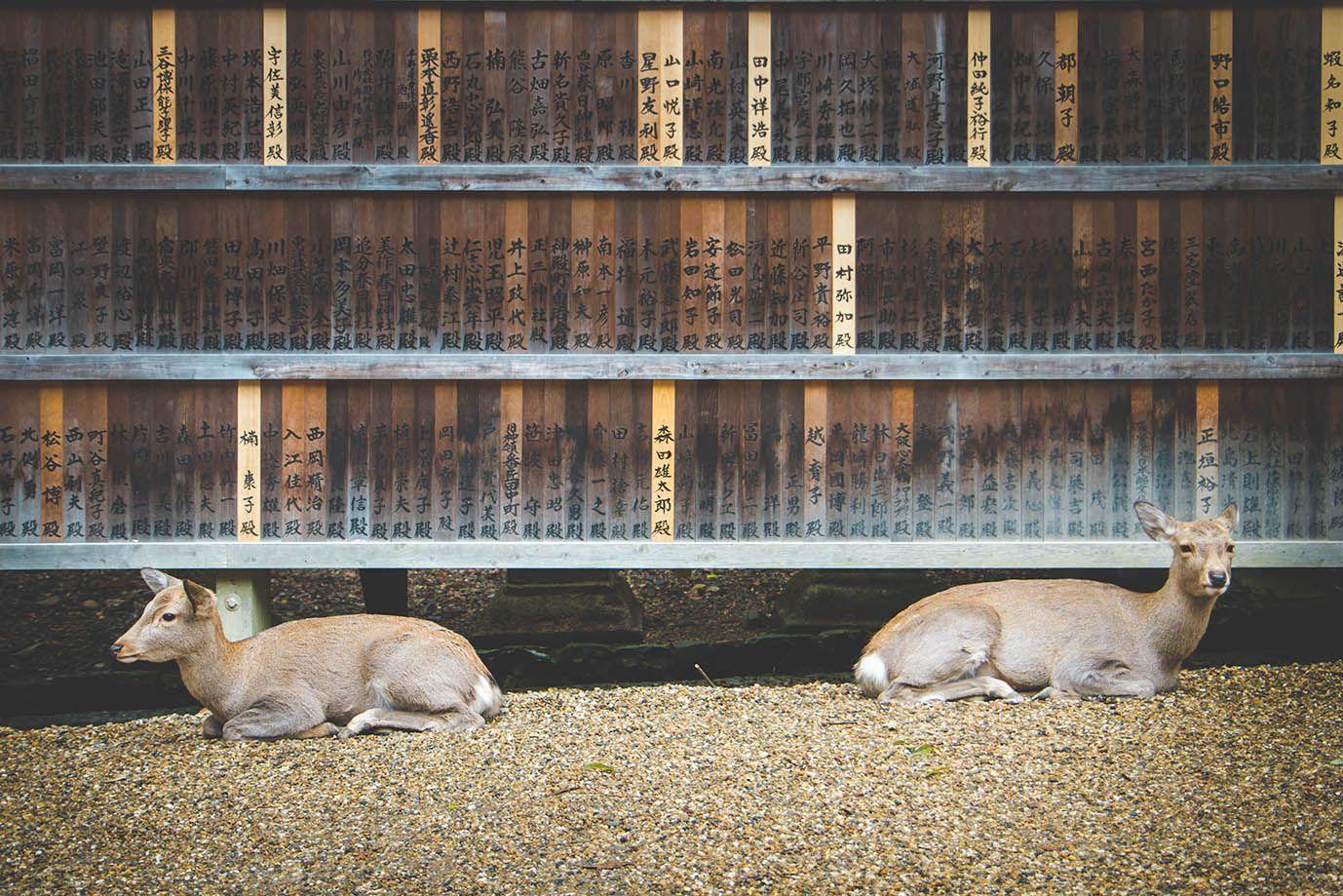 Kawaii deer at Nara Park