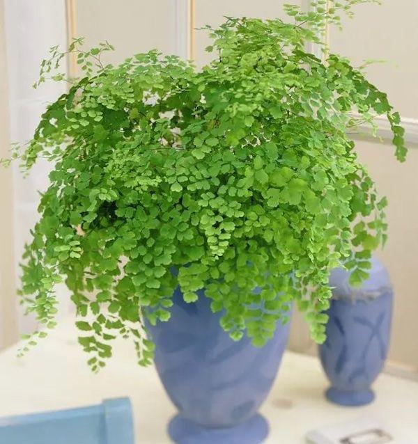 24 Belles Plantes Qui Poussent Meme A L Ombre Plante Interieur