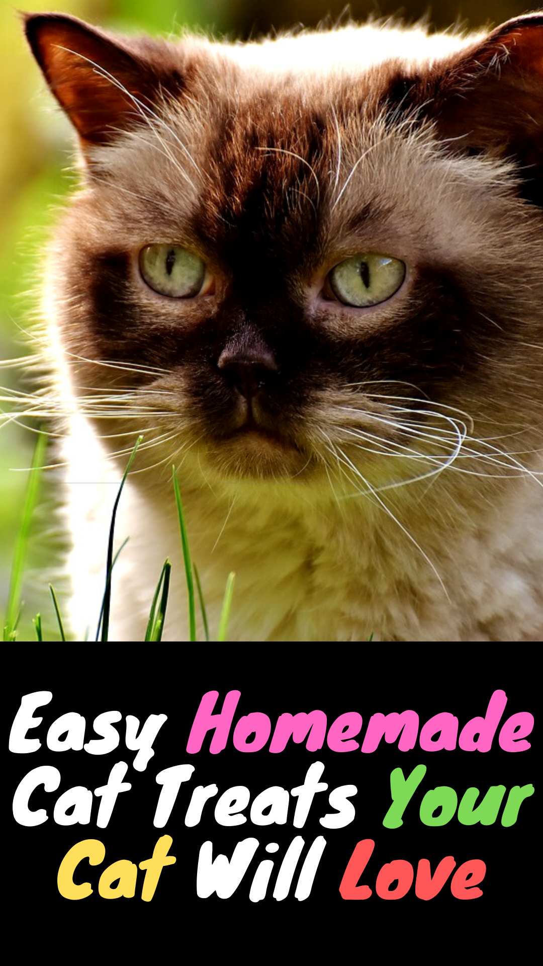 Purrfect Homemade Treats For Your Cat  DIY