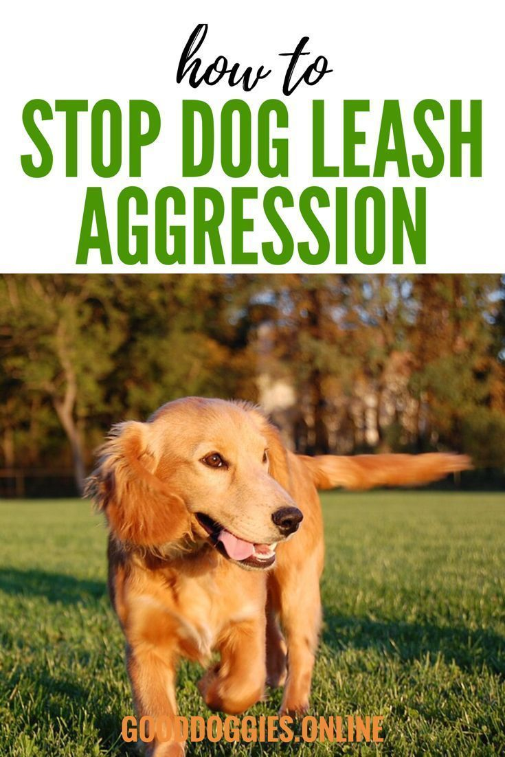 Get Rid Of Dog Leash Aggression Once And For All Dog Training