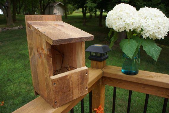 Cardinal Box Building Nesting