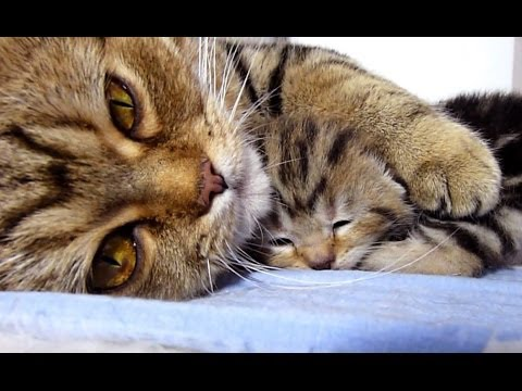 Mom Cat Talking To Her Cute Meowing Kittens Generation P