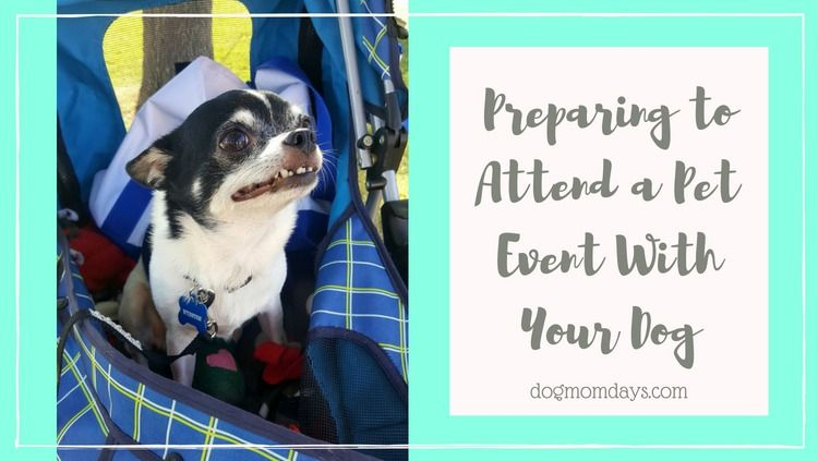 Tips For Preparing To Attend A Pet Event With Your Dog Pet Event Pets Your Dog