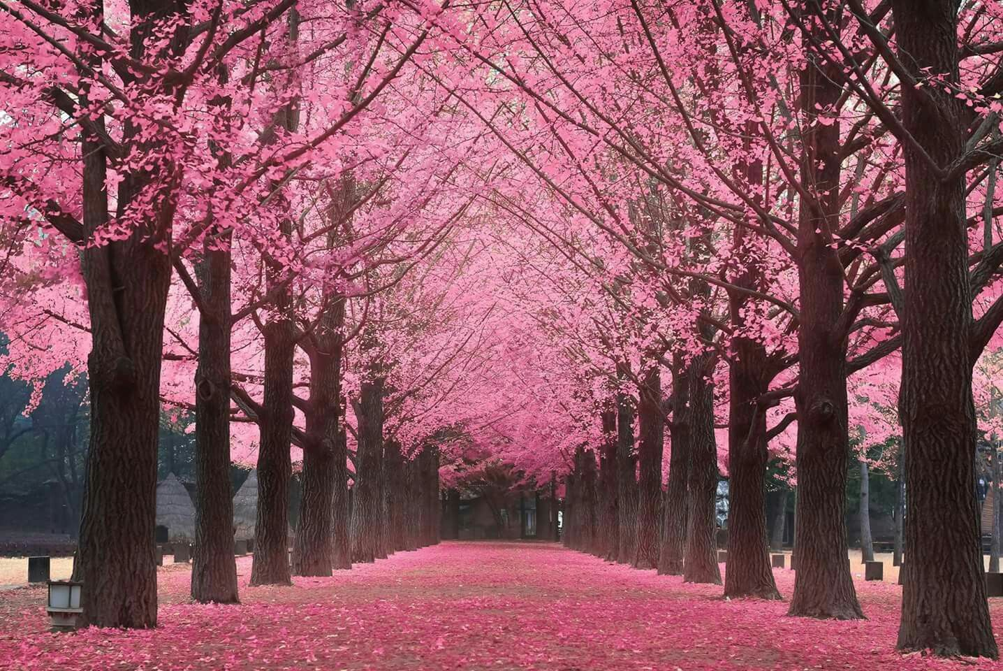 Our Generosity Toward Others Is Key To Our Positive Experiences In The World Know That There S Enough Ro Cherry Blossom Spring Season Nature Beautiful Nature