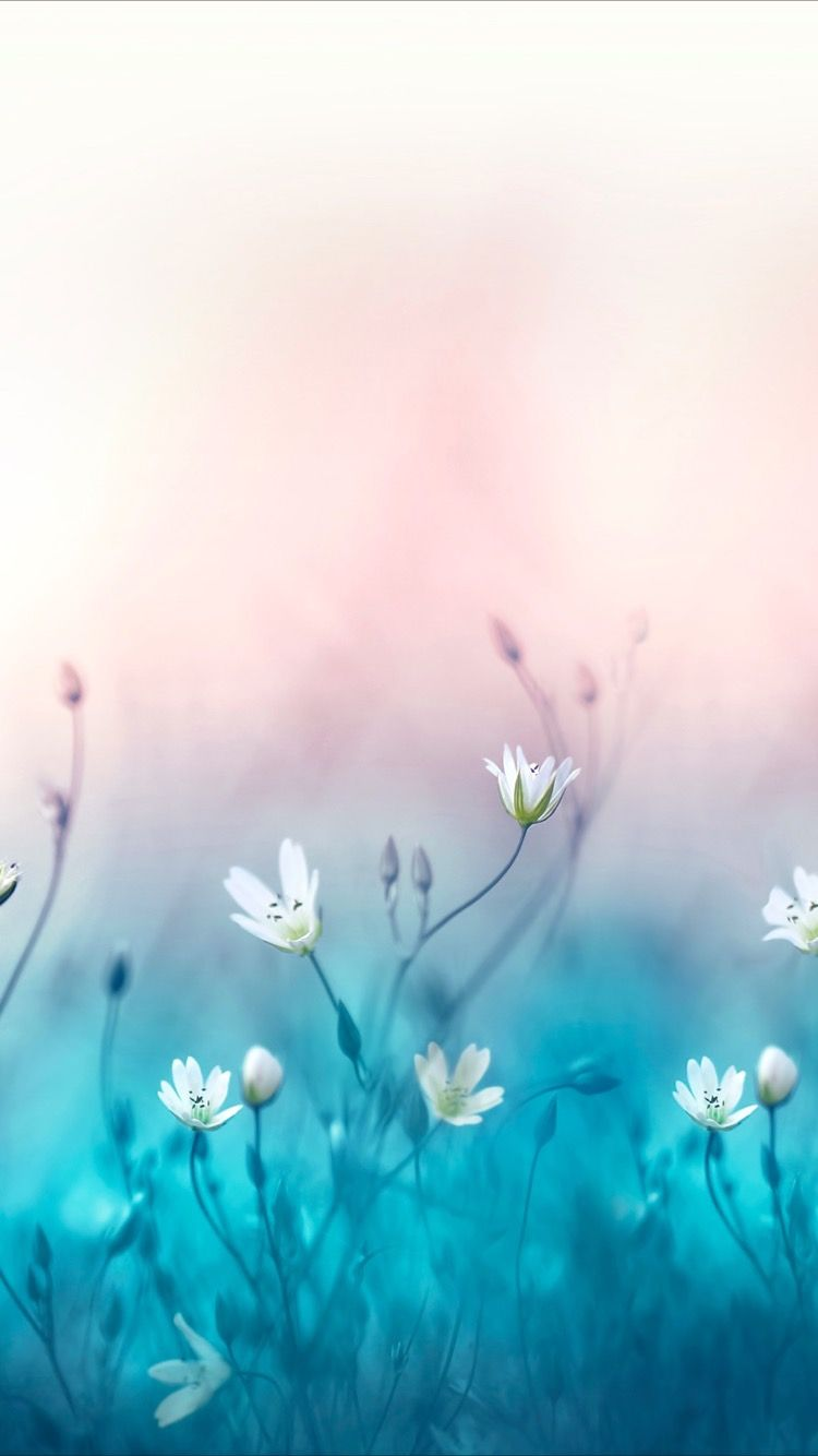Peaceful And Beautiful Wallpapers Bonitos Papeis De Parede Azuis Belas Flores