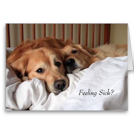 Golden Retriever Get Well Soon Greeting Card Zazzle Com Golden Retriever Dogs Golden Retriever Dog Friends